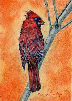 Male Cardinal by Karen Curley