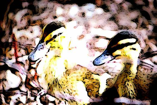 Mallard Ducklings by Jennifer Choate