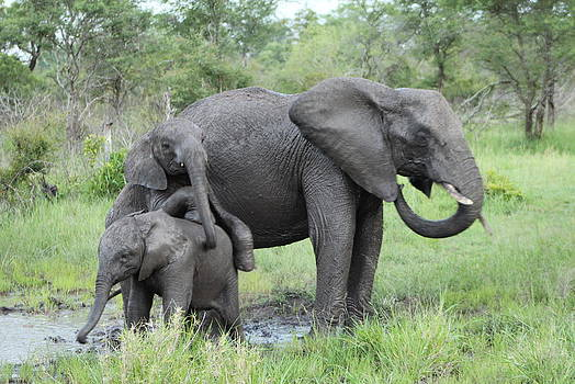 Mama and Baby Elephants by Denise Dean