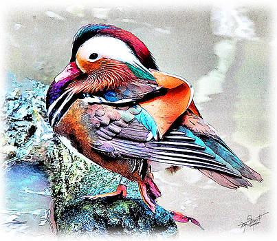 Mandarin Duck by Tom Schmidt