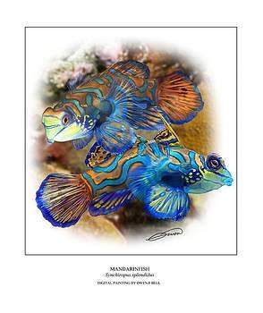 Mandarinfish 2 by Owen Bell