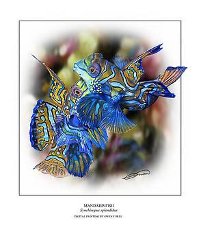 Mandarinfish 3 by Owen Bell