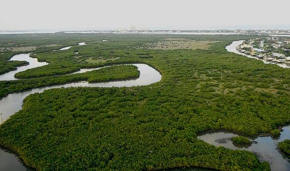 Mangroves by Jonathan Mojica