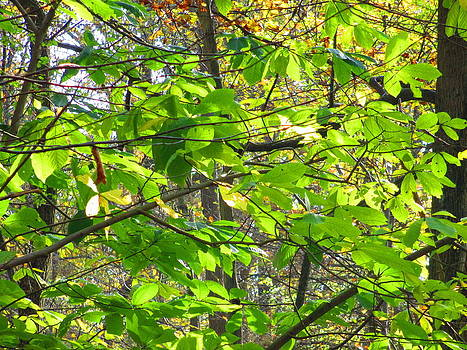 Andrew Hench - Many Many Leaves