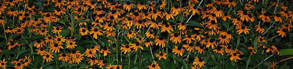 Michelle Cruz - Many Yellow Flowers