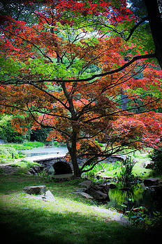 Maple Aglow by Swift Family