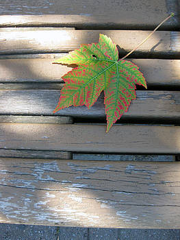 Maple Leaf Park Bench by Charles Dancik