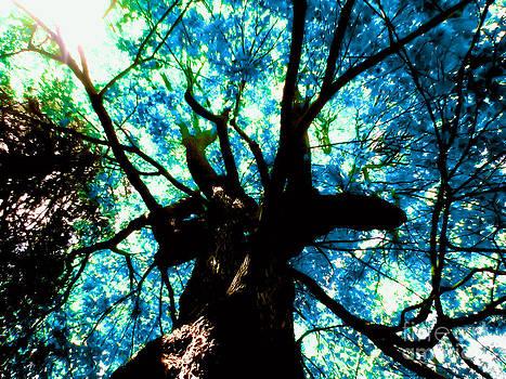 Maple Tree Aqualized by Shana Blake