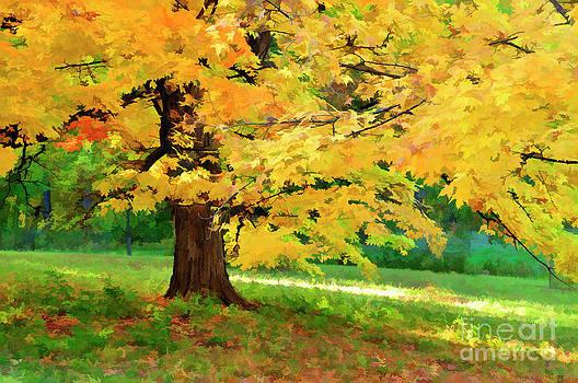 Maple Tree in Fall by Maria Aiello