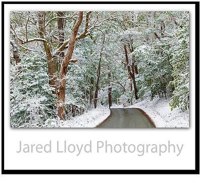 Maritime Snowfall  by Jared Lloyd
