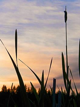 Marsh Sunset by Seth Shotwell