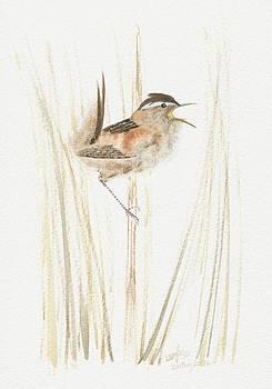 Marsh wren by Wenfei Tong