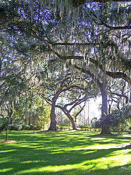 Patricia Taylor - Marshes of Glynn Graceful Oaks
