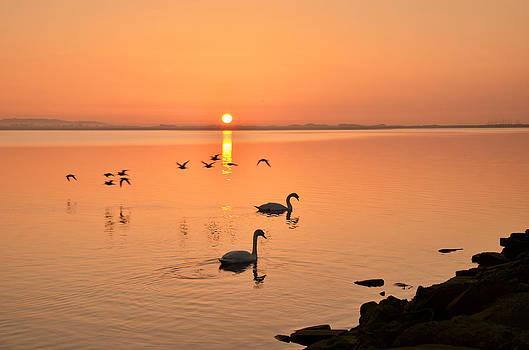 Martina Fagan - Martina Fagan Sunrise Fly by