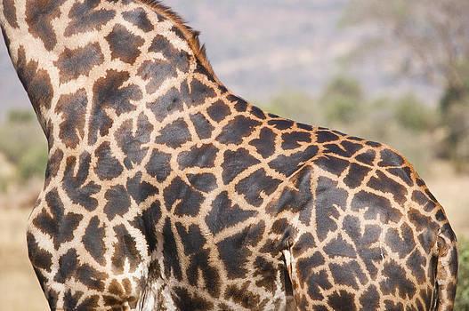 Howard Kennedy - Masai Giraffe Close-up