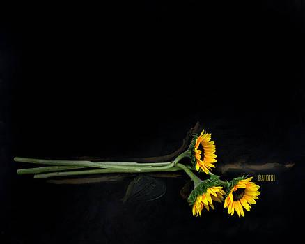 Master Sunflowers by J R Baldini M Photog