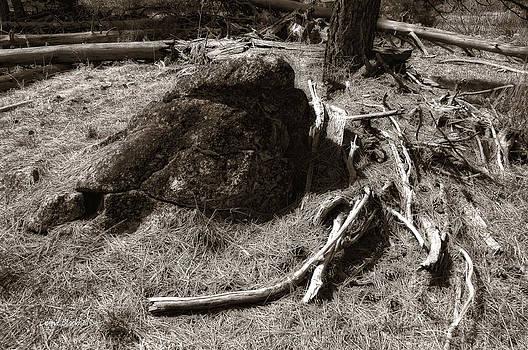 Donna Blackhall - Mastodon