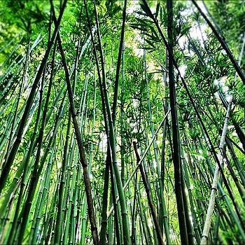 Maui Bamboo Forest by Chris Fabregas