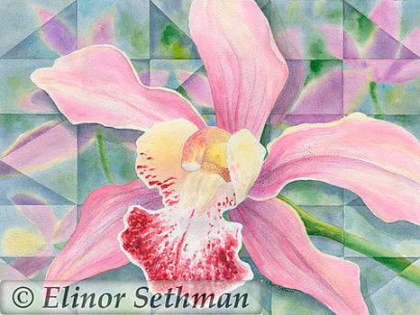 Maui Orchid by Elinor Sethman