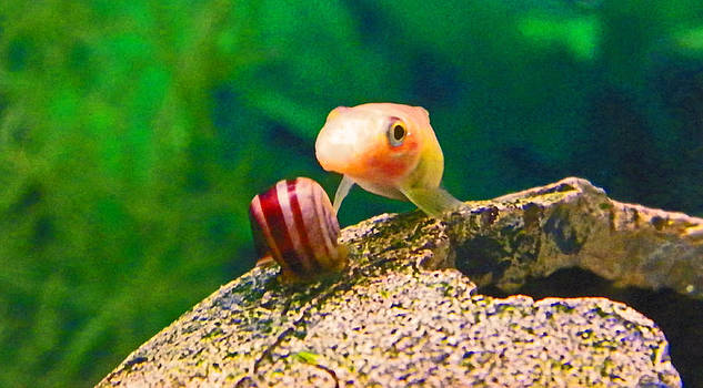 Me And My Snail by Seth Shotwell