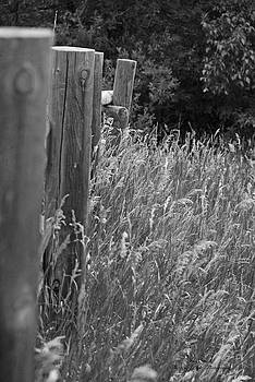 Meadow Fence Line BW by Sheryl Cox