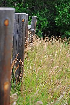 Meadow Fence Line by Sheryl Cox