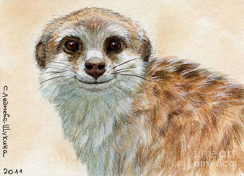 Meerkat by Svetlana Ledneva-Schukina