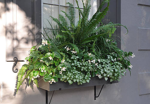 Meeting Street Window Box by Lori Kesten