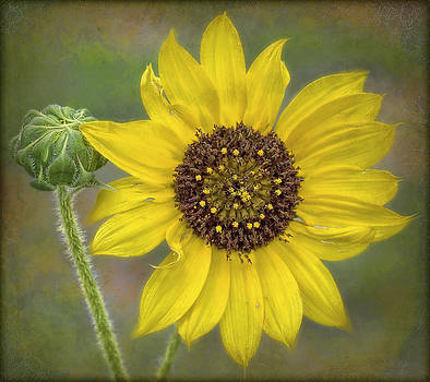 Mellow yellow by Hazel Billingsley