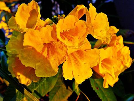 Mellow yellow by Peter P G