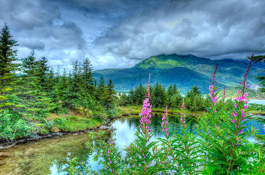 Mendenhall Fireweed by Don Mennig