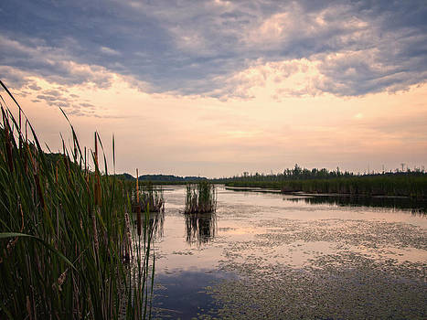 Mer Bleue Bog in the Summertime by Philip G