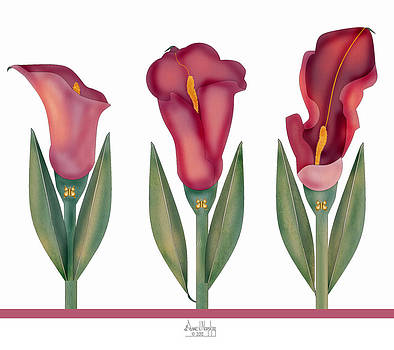 Merlot Calla Lily X 3 on Ribbon by Anne Norskog