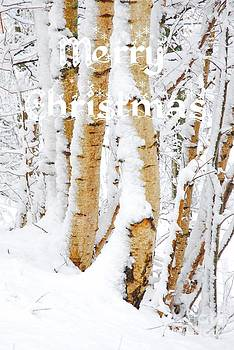 Merry Christmas - Snow covered Birch trees by John Kelly