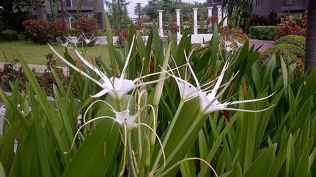Meus Ortus Flora by SAIGON De Manila