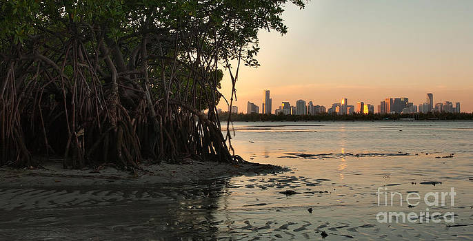 Miami with Mangroves by Matt Tilghman