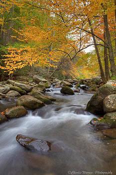 Mid Stream II by Charles Warren
