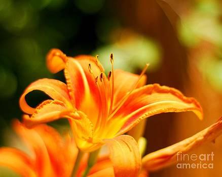 Mid-Summer Beauty by Crissy Sherman