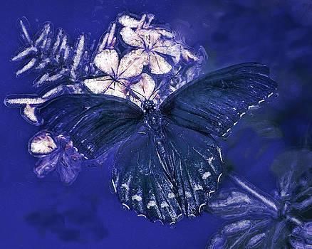 Midnight Blue by Jill Balsam