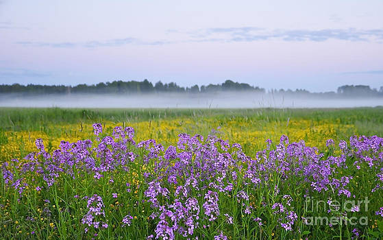 Midnight light with flowers by Conny Sjostrom
