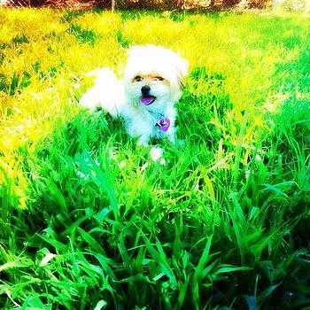 Mila At The Doggy Park by Melanie Kartawinata