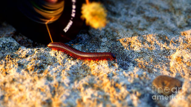 Chuck Smith - Millipede - 2011