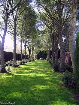 Rachael Shaw - Millstream Gardens 35