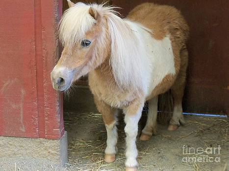 Miniature Horse by Lorrie Bible