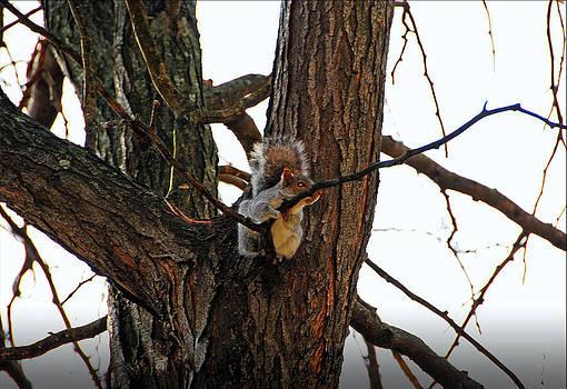 Mischievous Squirrel by Janet G T