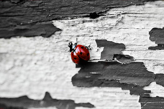 Miss Red by Elizabeth Hart