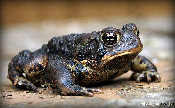 Mister Toad by Alivia Houdek