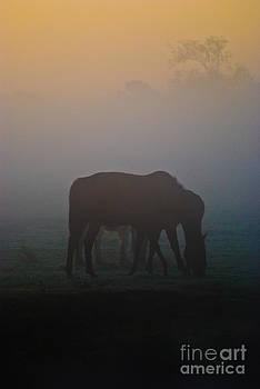 Yhun Suarez - Misty Dawn 3.1