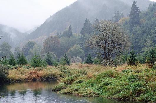 Margaret Pitcher - Misty Meadow
