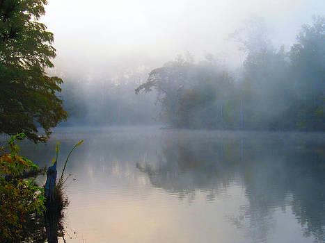 Misty Mornin by Shannon Hill